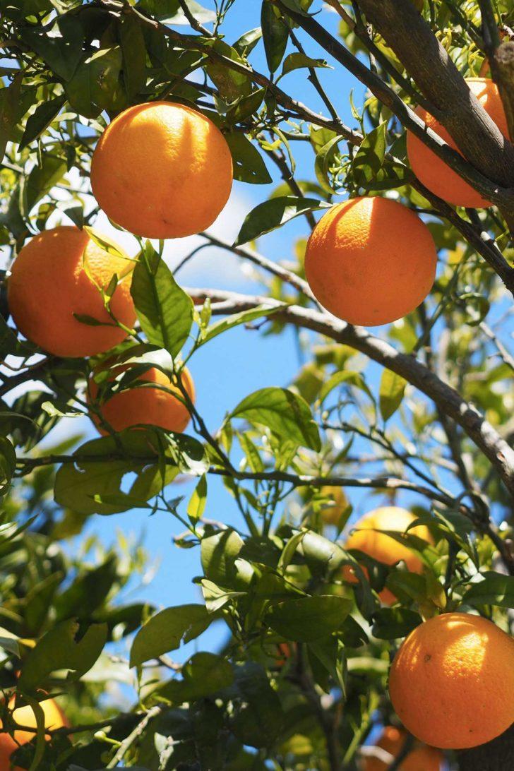 Foto: Stazione delle arance di Paternò - San Marco
